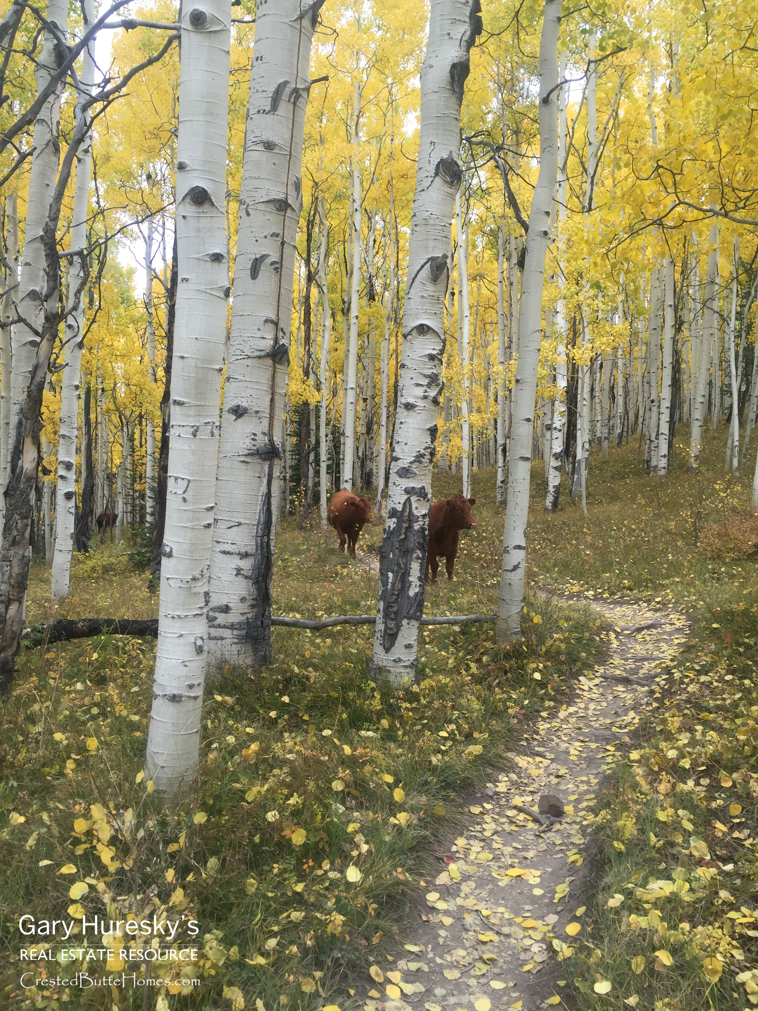 Fall-Crested-Butte-Real-Estate-Strand-Hill-Cows