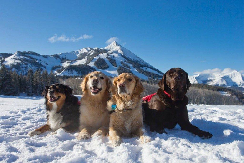 crested butte real estate dogs