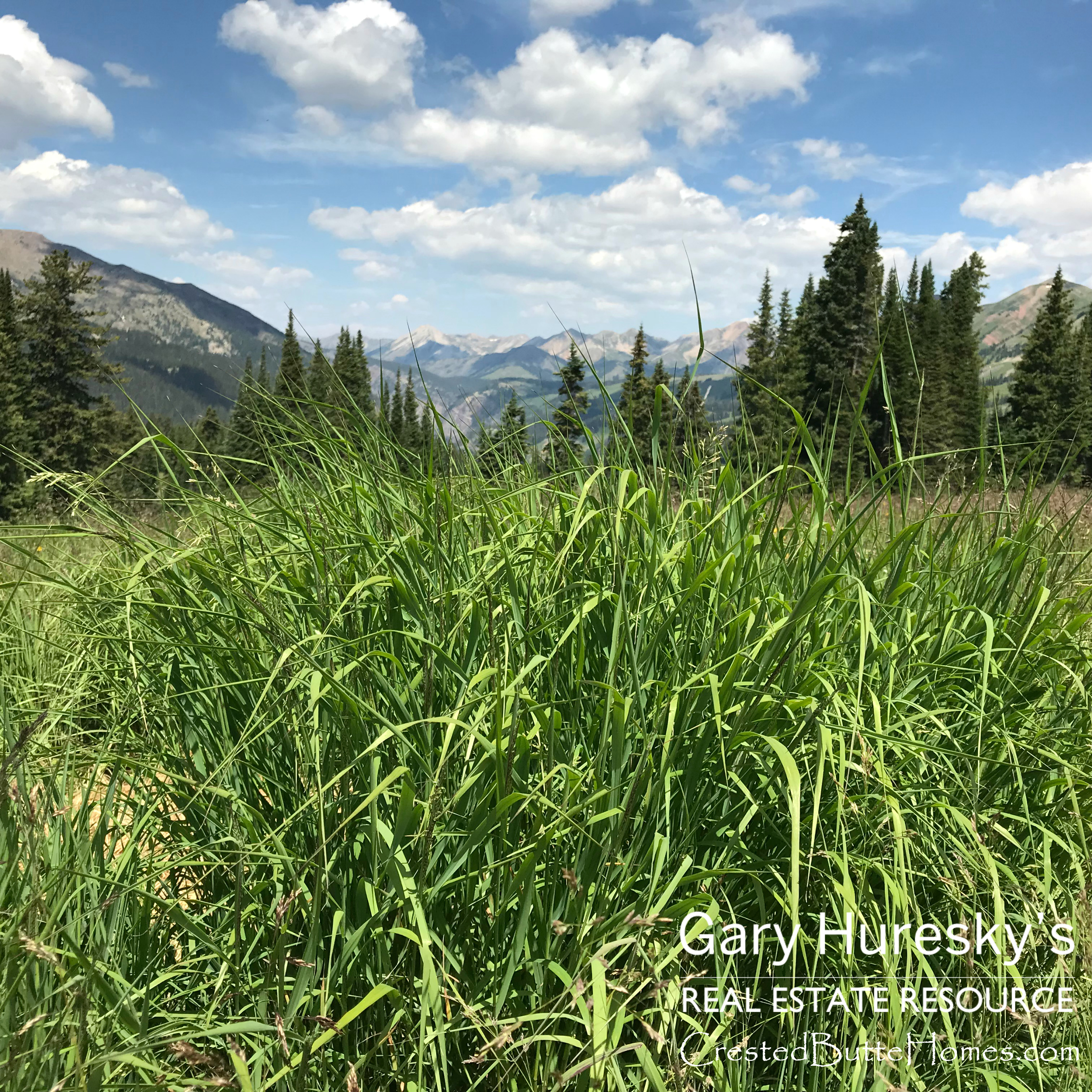 401 Crested Butte
